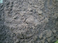 芝の種に被せる砂(アップ)